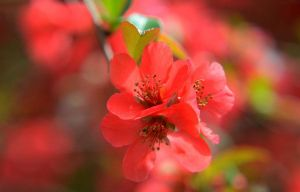 Red flowers by Daisydog8