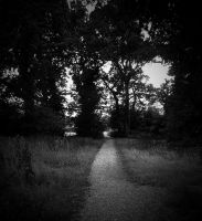 path through cuckoo woods by awjay