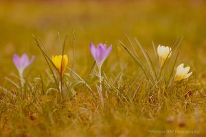 Bunter Fruehling 2 by Martina-WW