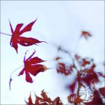 red wind III by prismes