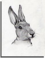 Hare sketch by mkuppe