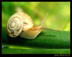 snail444 by cartell1985