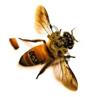 Steampunk Bee by cesterical