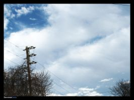Skywires by Dominick-AR