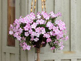 Beautiful Flowers by whendt