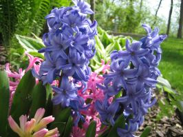 Pink and Blue flowers 2 by darchiel