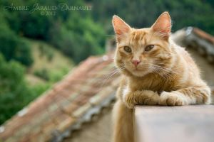 Cat On The Roof by darkcalypso