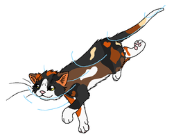 RiverClan - Robinwing by WildpathOfShadowClan