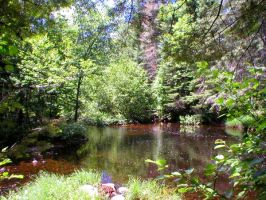 Peaceful Pond by Mishall