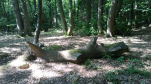 just a tree trunk by maurice1997
