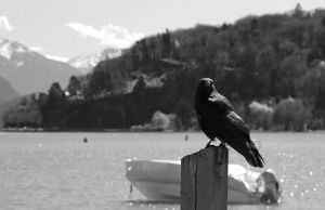 Crow by the lake by lhauert