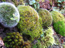 My Moss Kinds by AngelTimi88