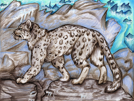 Snow Leopard by JustRach