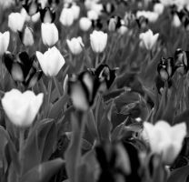 Bed of Flowers BW by RakelClark