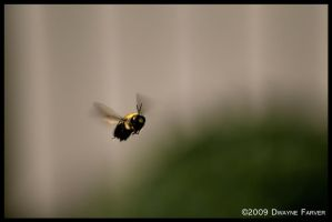 Flight of the Bumblebee by DwayneF
