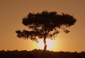 Sun and tree (Day 266) by Hedwigs-art