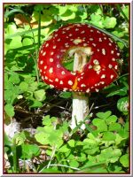 Little Red Cap... by Yancis