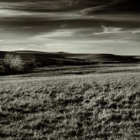 The Prairie at Dusk by clippercarrillo