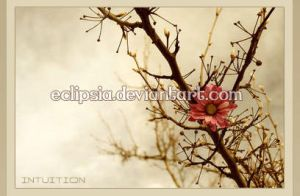 Intuition - Red Flower - by eclipsia