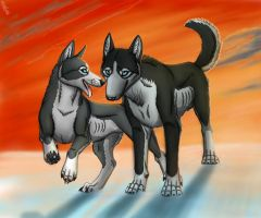 Huskys by BullTerrierKa