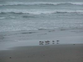 Seagulls on the beach by Deaconess