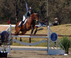 Showjumping 125 by aussiegal7