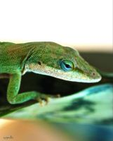 Day Dreaming Anole by FallOut99
