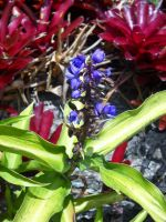 Purple Flower and Fuschia Flowers in Backgrounded by TheWizardofOzzy