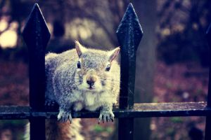 Squirrel at Hyde Park, London by TheLovingKind89