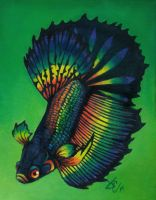 Black Orchid Rainbow Betta by greyviolett