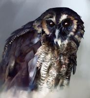 Brown wood owl by Ketunleipaa