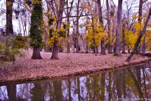 Spring in Ifrane Morocco by FayssalArt
