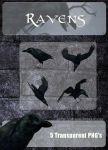 3D Raven Pack by zememz