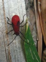 Red Insect by my-dog-corky