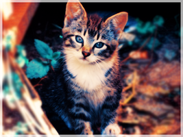 All cats are ours by Kotomarii
