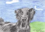 Flat-Coated Retriever Portrait by Miss-Whoa-Back-Off