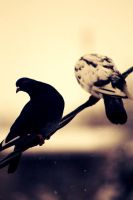 Two shy birds by Geterly