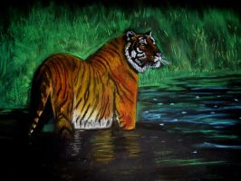 Bengal Tiger by Pictaview