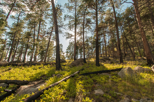 Devils Tower forest by sequential