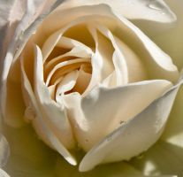 Heart of a Rose by TheInnerBeauty