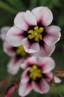 Spring flowers by finhead4ever