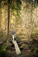 Finnish forest by valkeeja