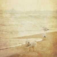 Seagulls III by Justysiak