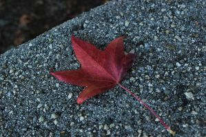 Leaf 12 by Thepieholephotograph