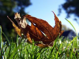 falling for autumn by foodshelf