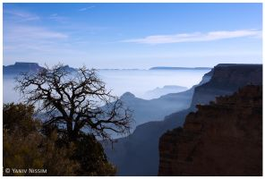 Morning In The Grand Canyon by ynissim