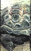 Turtle Signature by WolvyDesigns