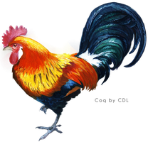 Coq - Cock PNG by cendredelune