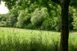 Meadows and Trees 8 by LuDa-Stock