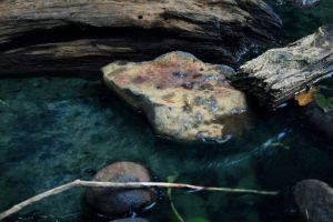 UnForgiven. by naturesounds
